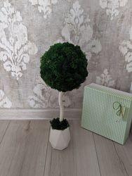 Эко-дерево, топиарий из стабилизированного мха