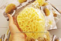 Морские губки Honeycomb для тела и лица. Греция СКИДКИ