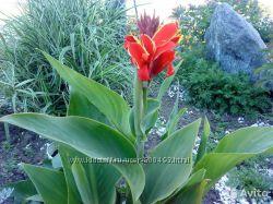 Красивые цветочки и кустарники. Крым