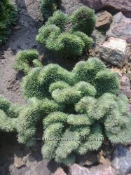 Многолетние, почвопокровные растения для альпийских горок