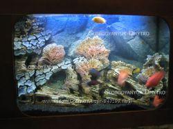аквариумы морские и пресноводные