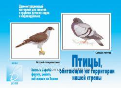 Птицы - дидактический материал.