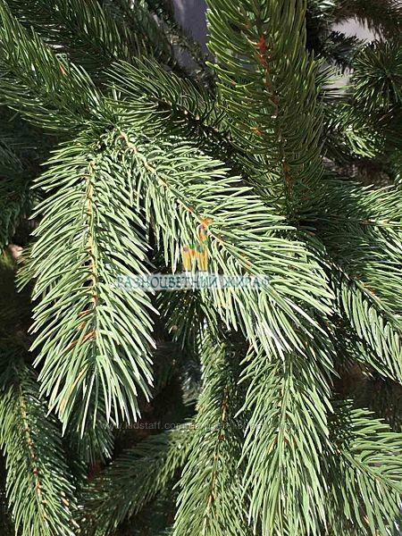 Ель литая зеленая от 1, 5 до 2, 3 метров