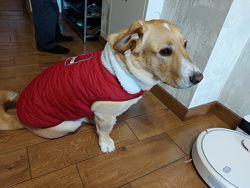 Продам  зимнюю жилетку для собаки