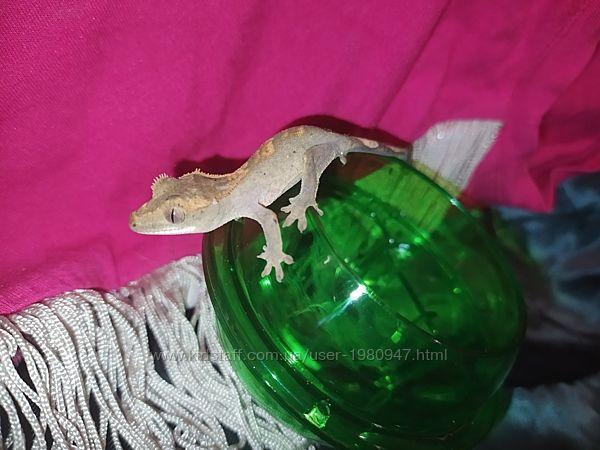#2: геккон