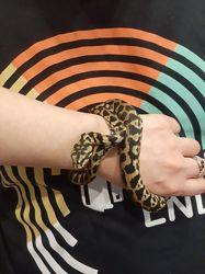 Самка ковровый питон Хет Ягуар 70 см, ручная змея